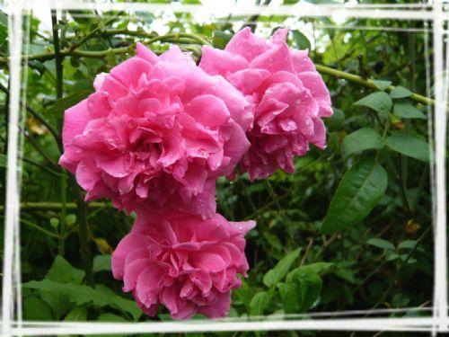 花卉 图片素材 论坛 小荷作文网 -花卉