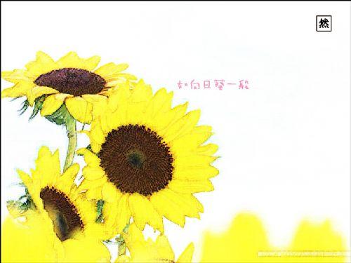 转手绘图1(向日葵) (咖啡的苦涩)修改于2009-3-22